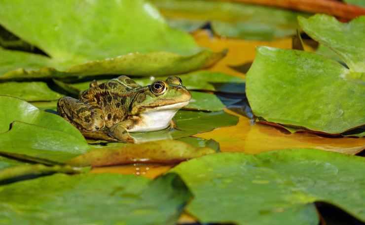amphibian animal beautiful biology